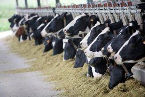 hayvan çiftliği kurmak